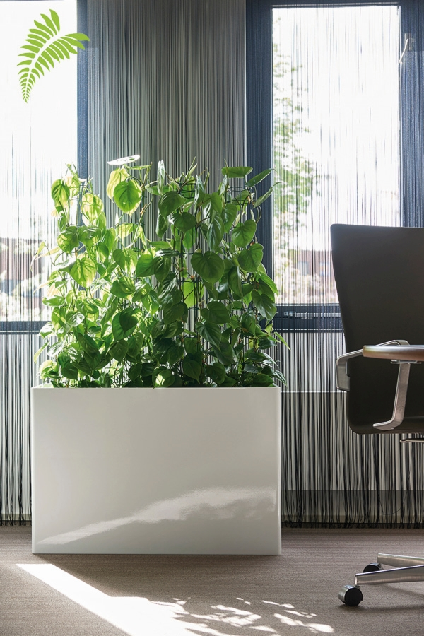 Prestige Rechteck RAL 9010 Philodendron